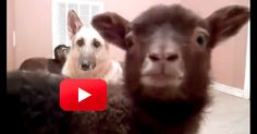 5 Second Video Will Be The Best 5 Seconds Of Your Day…Promise! | The Animal Rescue Site Blog