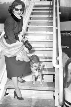 Ava Gardner and her dog, Rags at the airport, photographed by Tom Gallagher, 1956.