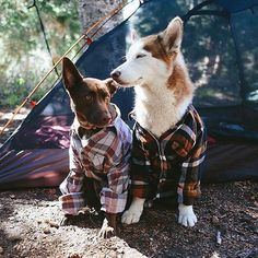 Dressed to impress. #campingwithdogs @abigaildemyanek
