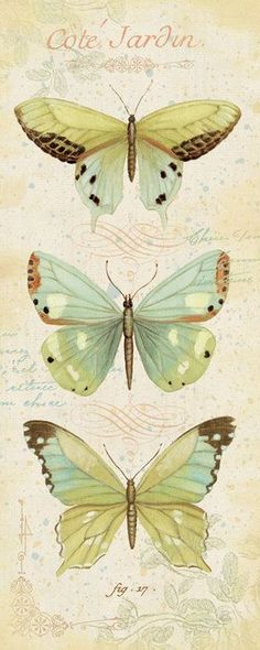 Cote Jardin V by Daphne Brissonnet Vintage Butterfly Art Print- Art And Illustration, Illustrations, Vintage Pictures, Vintage Images, Vintage Printable, Motifs Animal, Poster Prints, Art Prints, Posters