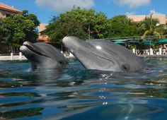 Dolphin Discovery Riviera Maya, make a new dolphin friend today!