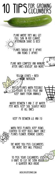 Ten Tips for Growing Cucumbers.