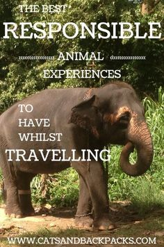 Sustainable Tourism and Eco Travel | How To Be A Responsible Traveller. The most responsible animal experiences you can have while traveling.