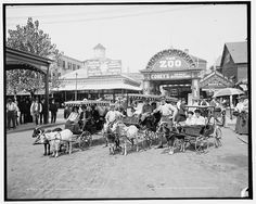 #goatvet likes this photo of Coney Island Goat Carriages