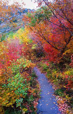 Autumn Walk In Mt Timpanogos Utah