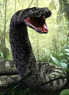 "48-foot snake. I am not really fond of the article calling him a ""monster"" and showing a picture from the anaconda movie. Let's not encourage the public's fear of snakes, k? Other than that, cool article."