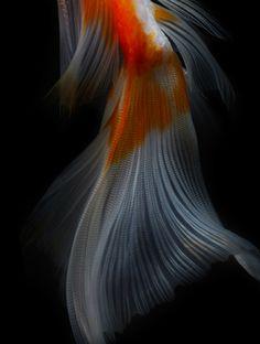 still life fish photography by hiroshi iwasaki, japan
