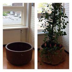 Samen met Ashlyn de plantenbank op de 1e etage gedaan ,  ziet er goed uit al zeg ik het zelf!