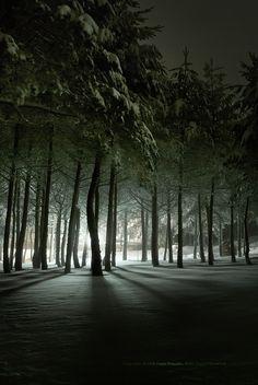 Long exposure w/ tree silhouettes.