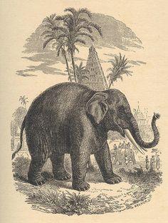 1000+ images about Elephants: Illustrations (historical ... Vintage Elephant Illustration