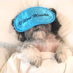 27 Adorable Shih Tzus Who Will Make Your Day Better...I would SOOOO do this with my Future Baby