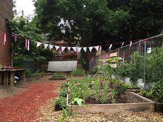 natural dye garden, brooklyn NY - inspiration