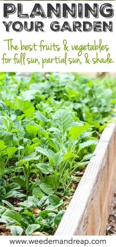 Planning Your Garden: The Best Vegetables For Full Sun, Partial Sun and Shade    Weed 'Em and Reap
