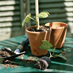 If you're itching to get started in the garden, now may be a good time to sow some seeds.