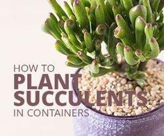 Get step by step instructions for potting your newly purchased succulent