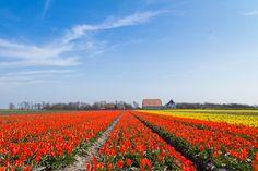 Gratis fietsroute Oudeschild De Koog en Oost Texel: 41 kilometer | Vakantie op Texel The Province, Trees To Plant, Holland, Vineyard, Places, Flowers, Outdoor, Europe, Netherlands