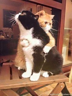 https://www.facebook.com/Worlds.Cute.Pet/photos/a.910915238944500.1073741828.427141163988579/939205489448808/?type=3