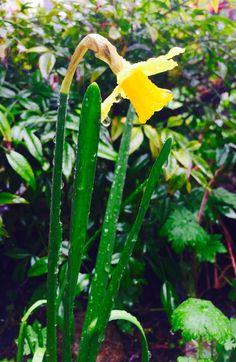 Raindrops! #spring