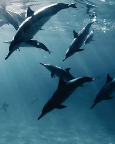 For Dolphins Lover ♥️❤️ - Dolphin♔Liebe - Animals Underwater Creatures, Ocean Creatures, Underwater World, Beautiful Creatures, Animals Beautiful, Belle Image Nature, Best Video Ever, Delphine, Tier Fotos