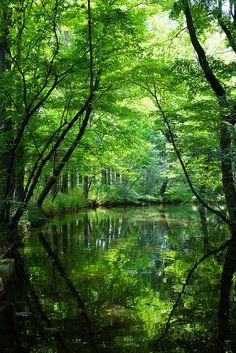 green shower | Flickr - Photo Sharing!