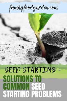 Learn some solutions to common seed starting problems such as leggy plants, molds, or it simply just didn't sprout. Here's everything you need to know about seed starting plus a few tips on how to handle them. See it here! #gardening #gardeningtips #seedstarting Beef Recipes, Cooking Recipes, Seed Starting, Kitchen Recipes, Easy Cooking, Gardening Tips, Seeds, Easy Meals, Handle