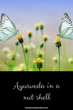Ayurveda in a nut shell