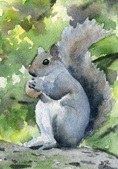 Squirrel ~ Watercolor by DJR