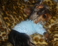 Our baby Gidget on her Susan Lanci snuggly and leopard bow... I just loved the kitty cat Oscar Newman Dog top...   http://hautedoggie.blogspot.com/