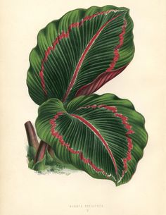 The Graphics Fairy: tropical leaves