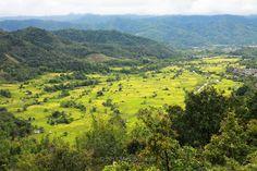 Lush Paddy Field in Tambunan, Sabah