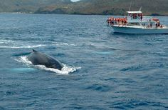 Things To Do In St Lucia | Coconut Bay St Lucia  Excursions & Tours | cruiserunners.com
