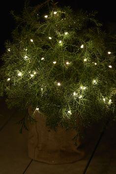 Design & After Christmas Lights, Christmas Tree, Tree Skirts, Holiday Decor, Design, Lighting, Home Decor, Green, Plant