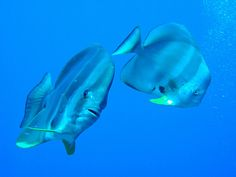 Fish Potraits 5