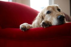 #Dogs can get #depressed, too -- especially if they've gone through a loss or a change in their routine or environment.