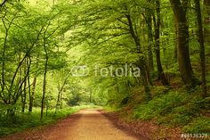Photo: Way into forest