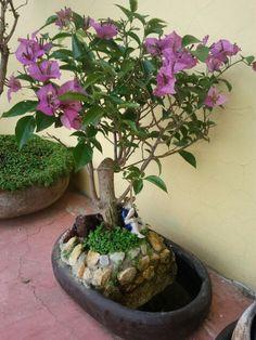 Bugambilia Bonsai