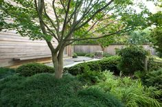 green-japanese-style-garden-mondo-grass-maples