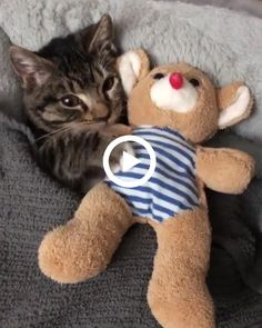 Adorable kitten always sleep with her teddy bear Whiskers On Kittens, Fluffy Kittens, Kittens And Puppies, Baby Kittens, Kittens Cutest, Cats And Kittens, Cute Cats, Baby Animals Pictures, Funny Cat Pictures