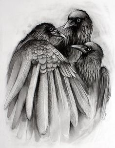 The Gathering - 8x10 Crow Raven Black and White Print from Original Drawing