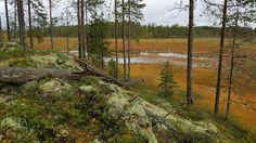 Kemppilän Suurisuo on yksi Etelä-Karjalan Luontohelmikohteista.