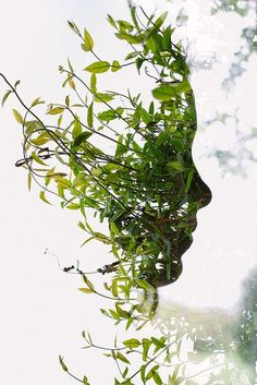 Face in the Bush by acearchie, via Flickr