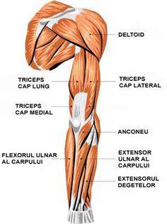 artrita carpului articulații și balsam de oase