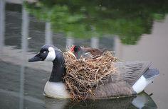 Veja 10 ninhos de pássaros feitos em lugares inusitados | Catraca Livre