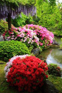 京都城南宮の見事な満開のツツジと藤の花