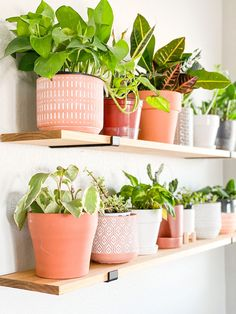 These simple DIY floating shelves bring so much warmth and life to any room! They are perfect for a plant collection as it keeps the plants away from kids and pets! Click the link to see the simple step by step tutorial to complete this DIY project to add these Boho style shelves to your home!   #homedecor #farmhouse #farmhousedecor #bohodecor #shelfie #shelfdecor #bedroominspo Home Decor Styles, Home Decor Accessories, Diy Home Decor, Floating Plants, Floating Shelves Diy, Simple Diy, Easy Diy, Christmas Lodge, Rustic Crafts