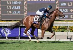 About 30 miles from Hollywood, Oscar Performance proved to be no act as he scored a clear victory in the $1 million Breeders' Cup Juvenile Turf (gr. IT) Nov. 4 at Santa Anita Park.