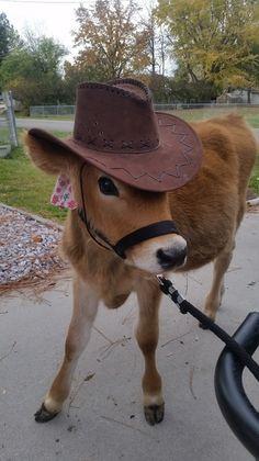 Cow Quotes, Pet Cows, Cow Face, Farms, Cowboy Hats, Cute Animals, Pets, Cow, Pretty Animals