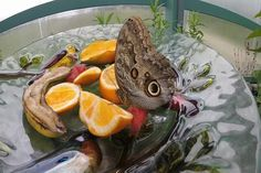 Jack's Journal: G.T. Butterfly House and Bug Zoo - Northern Michigan's News Leader