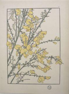 Jeannie Foord - Plate 11. Decorative Flower Studies. Paris: E. Greningaire, 1904.  http://fineantiqueprints.com/Botanicalsearly20th/FoordJeannieArtNouveau/2223