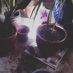 Repotting in progress. #plant #plants #plantsofinstagram #plantlove #plantlady #plantporn #plantgang #plantbabies #plantsmakemehappy #plantsmakepeoplehappy #houseplants #urbanjungle #growingthings #greenthumb #phytophilous #greenry #pottery #jackalopepottery #repotted #repotting #sproutandstem